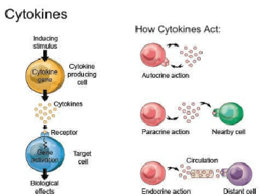 Cytokines stem cell therapy components