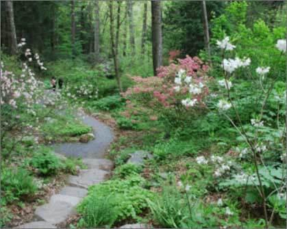 Garden in the woods framingham
