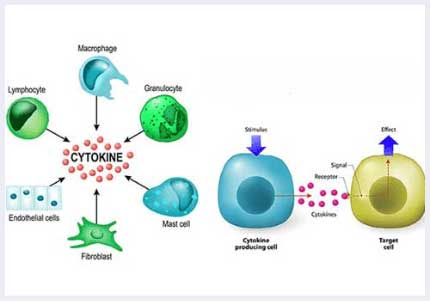 cyctokines for stem cell treatment