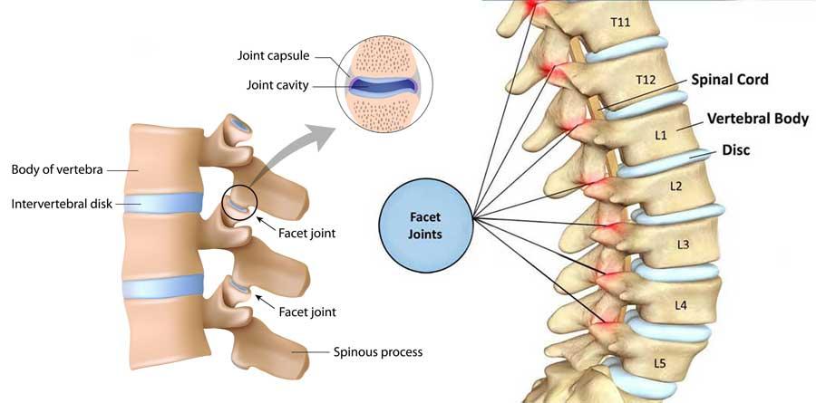 facet joint detail